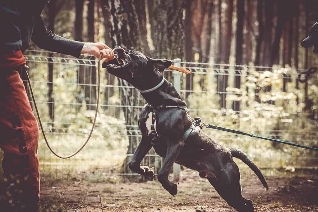 psy obronne