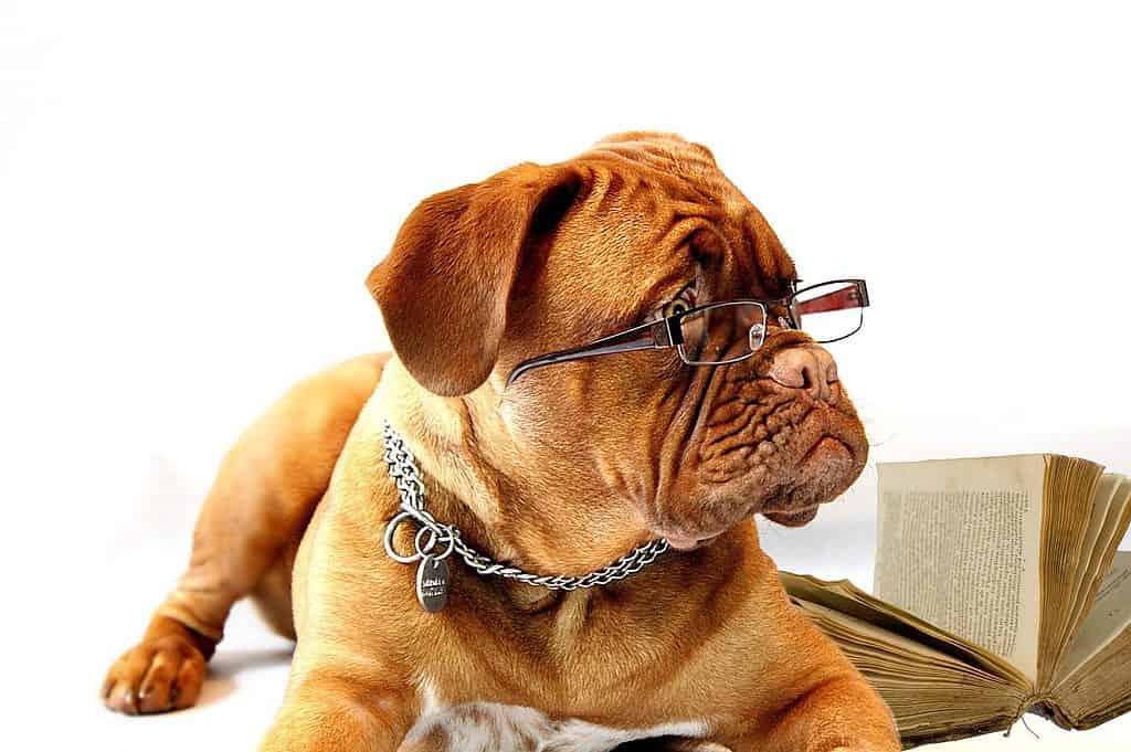 Indywidualne szkolenie psów