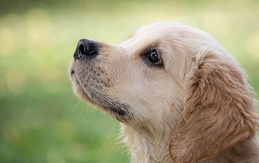szkolenie psów towarzyszących