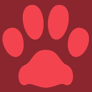 instruktor szkolenie psów