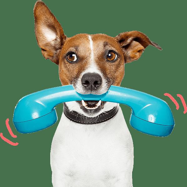 szkolenie dla psa warszawa