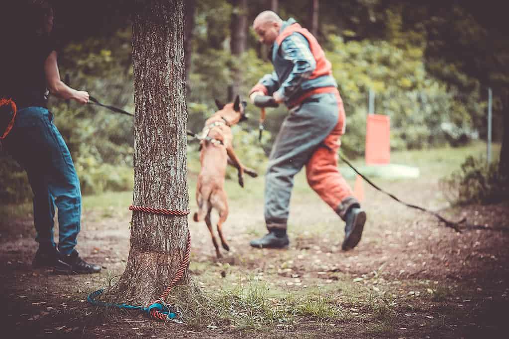 pierwszy trening z psem