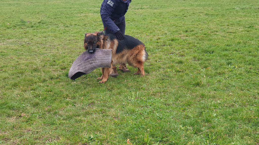 szkolenie psów obronnych