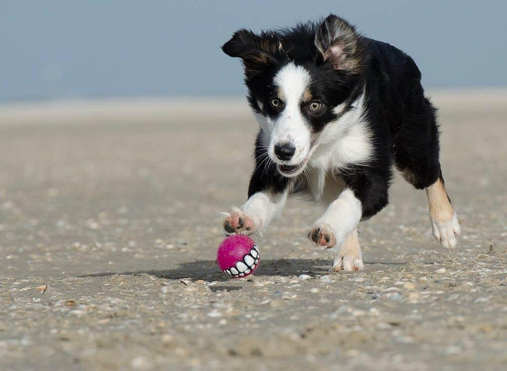 Gwizdek do szkolenia psów