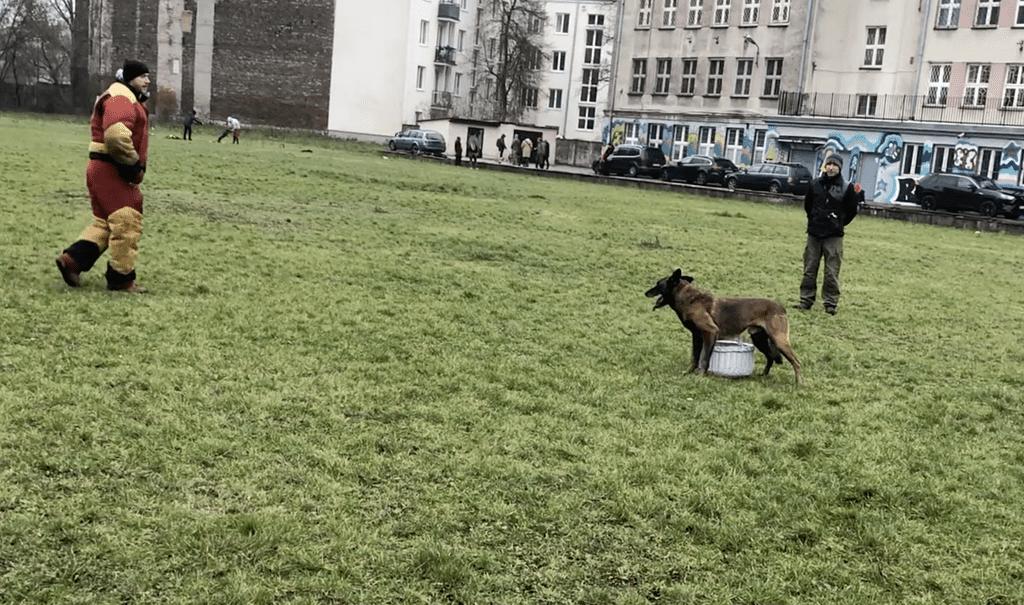 Szkolenie psów Warszawa